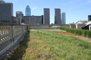 Green Roof at the Free Library of Philadelphia, Central Branch; Photo Credit: Philadelphia Water Department